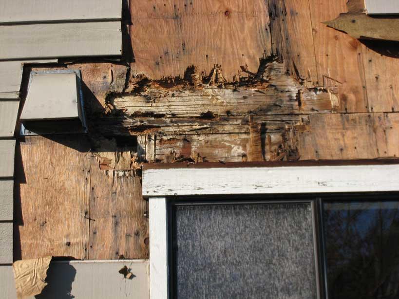 dry-rot-repairs-1